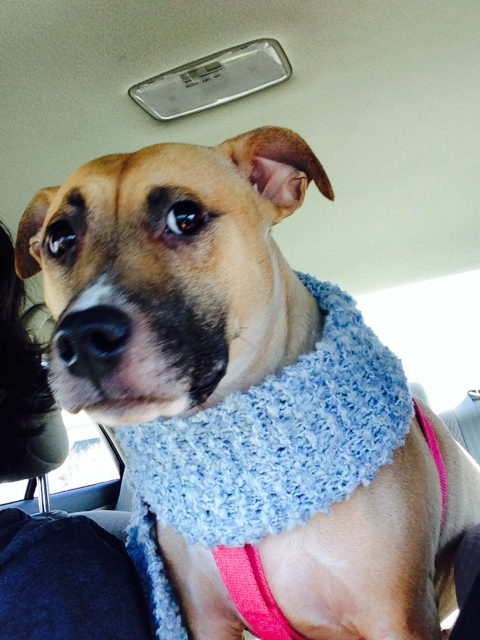 Daisy poses wearing scarf